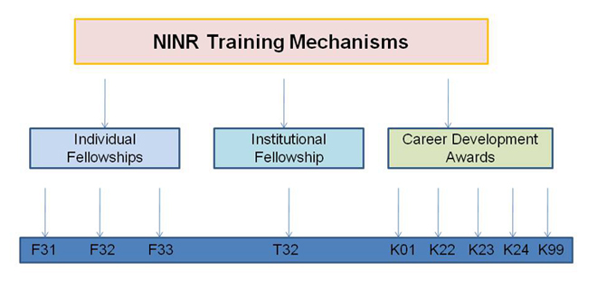 "Diagram of NINR Training Mechanisms. Chart has one large rectangular box at top titled ""NINR Training Mechanisms."" Underneath that box are three rectangular boxes labeled ""Individual Fellowships,"" ""Institutional Fellowships,"" and ""Career Development Awards.""At the bottom is a rectangular box reading from left to right: F31, F32, F33 (under Individual Fellowships); T32 under ""Institutional Fellowship""; and K01, K22, K23, K24, and K99 under ""Career Development Awards."